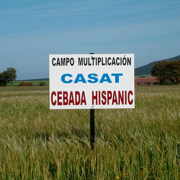 semillas_certificadas_1.jpg