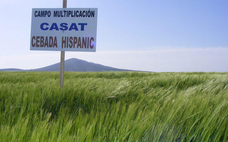 casat-cebada-hispanic