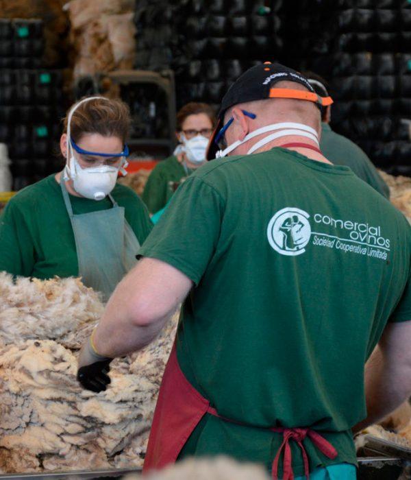 comercial-ovinos-casat-cooperacion
